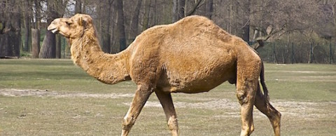 Hump Day Reading List camel